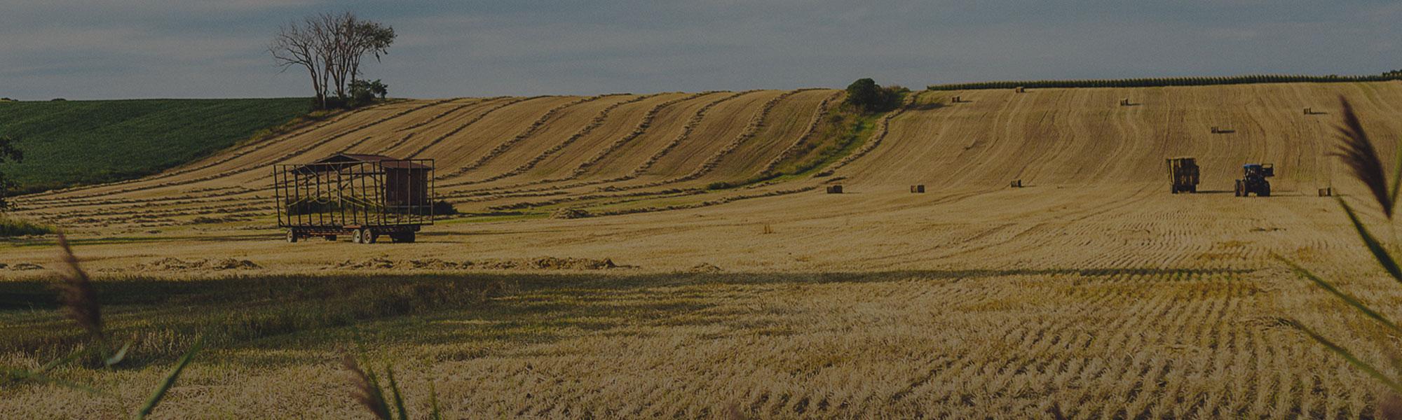 Agriculture Saint-Placide